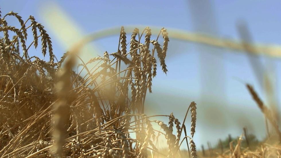 Rolnicy - Odcinek 10